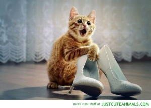 cute-animal-pictures-happy-cat-shoes